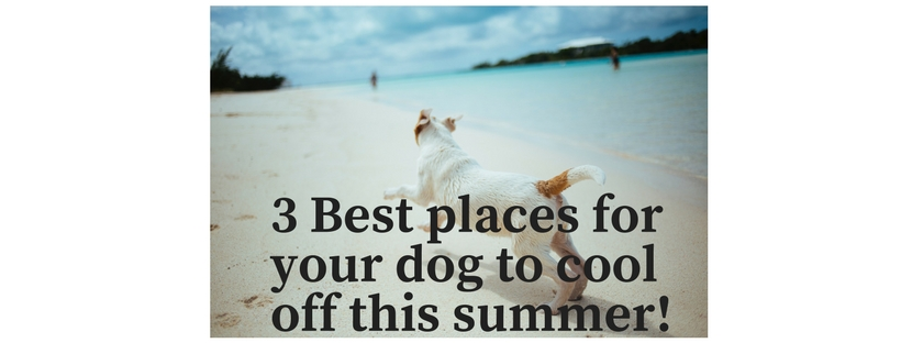 3 best places for your dog to cool off this summer