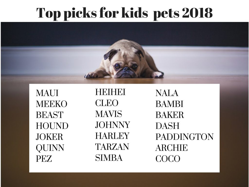 top pet names 2018 what 39 s your pick still with me pet. Black Bedroom Furniture Sets. Home Design Ideas
